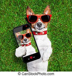 rolig, selfie, hund