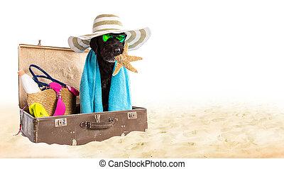 rolig, svarting hund, på, a, sandig, strand.