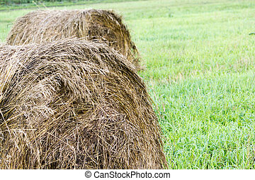 Roll in the hay on a green field