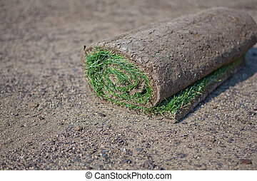 Sod  Rolls of sod on a pallet waiting to be truned into a new lawn