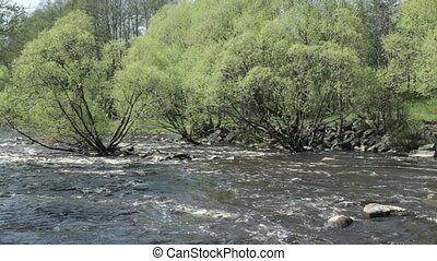 Roll on fast river - Fast stream Spring landscape, Fresh...