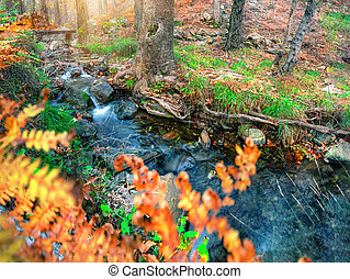 Roll on the mountain river in the autumn forest