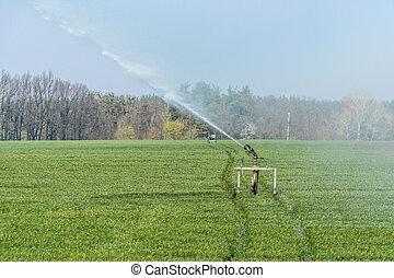Rollaway automatic sprinkler watering gun irrigating farmer's field in spring season.