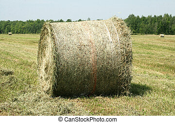 Rolled Bale of Hay