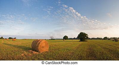 Rolled grass in Kansas, evening sun light
