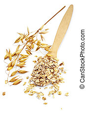 Rolled oats in a wooden spoon, stalks of oats is isolated on a white background