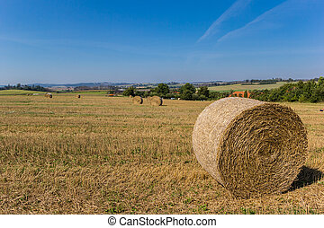 Rolled up hay in the landscape of Moravia