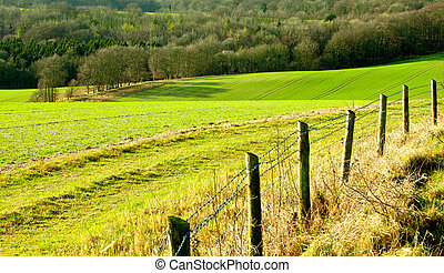 Rolling fields in rural England