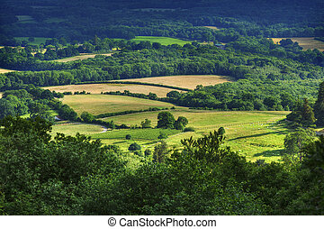 Rolling fields of the South Downs in mid summer, english countryside.