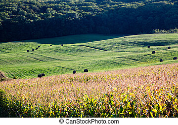 rolling green fields nature background