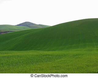 Rolling green hills in Tuscany, Italy
