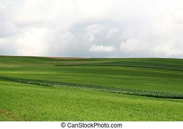 Rolling Green Hills on Lush Crop Farmland
