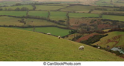 Rolling hills and farmland in Exmoor National Park, North ...