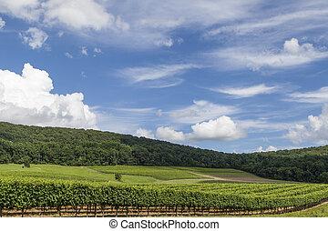 rolling hills of virginia