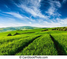 Rolling summer landscape with green grass field under blue...