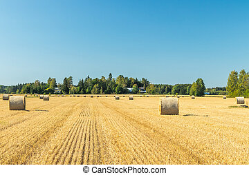 Rolls of hay bales in a field at farm.