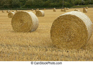 Rolls of hay - field of straw bales