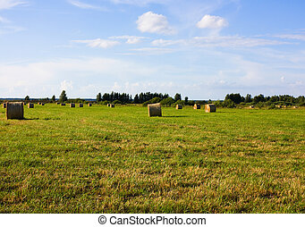 rolls of hay, field