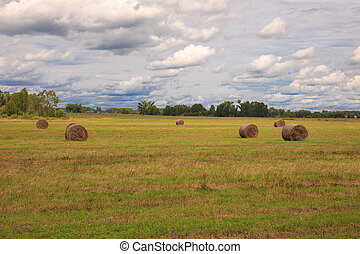 rolls of hay in a field