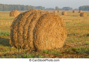 rolls of hay in field.