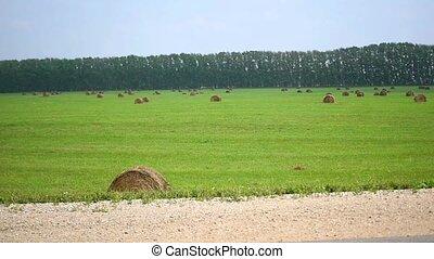 rolls of hay in field