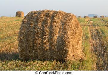 rolls of hay in field.