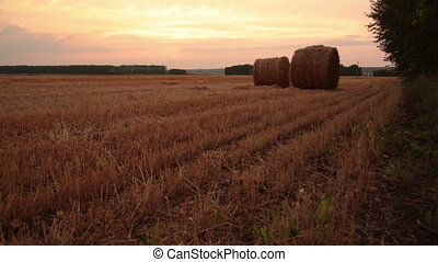 Rolls of hay in the field