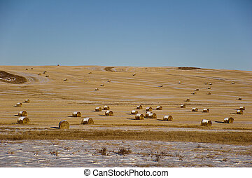 Rolls Of Hays On A Frozen Field