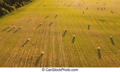 Rolls of haystacks on the field