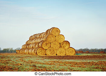 Rolls of haystacks on the field.