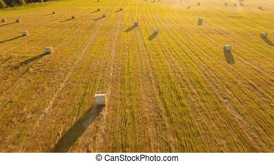 Rolls of haystacks on the field - Aerial view rolls...