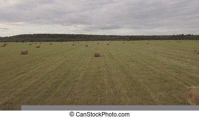 Rolls of haystacks on the field.Aerial video.