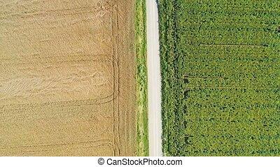 rolna droga, lato, truteń, scena, podnoszenie, brud