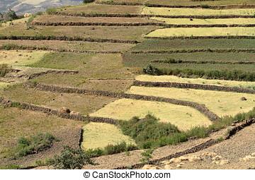 rolnictwo azji
