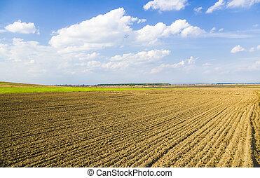 rolnicze pole