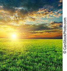 rolniczy, na, zachód słońca, zielone pole