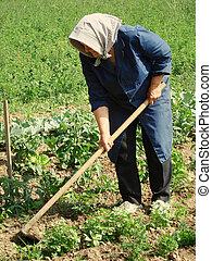 rolniczy, praca