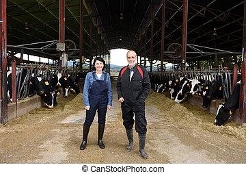 rolnik, krowy, para