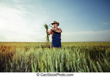 rolnik, pszenica, siła robocza