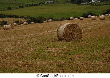 rolos, de, trigo, ligado, fazenda