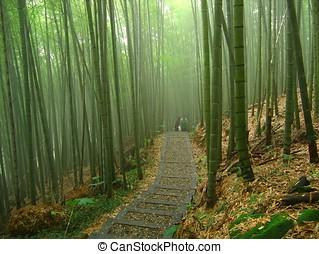 romántico, bosque de bambú