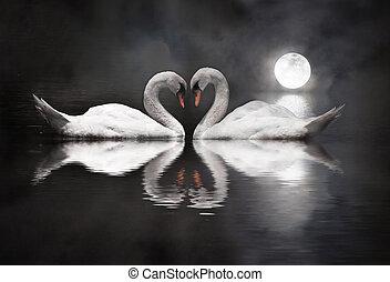 romántico, cisne, durante, día de valentín