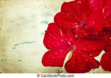 romántico, plano de fondo, de, flor roja