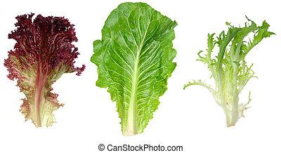 romaine, feuille, endive, salade verte, rouges