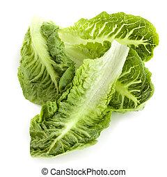 romaine lettuce, blade, isoleret
