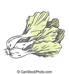 Romaine Lettuce Close up Graphic Illustration - Romaine...