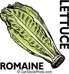Romaine Lettuce - An image of romaine lettuce.