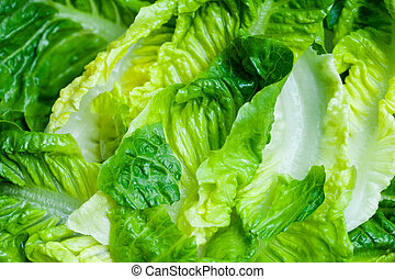 Romaine lettuce salad close up. Top view.