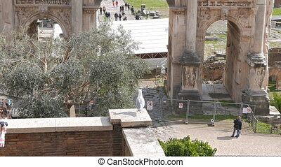 Roman Forum, Septimius Severus Arch. Rome, Italy. UltraHD...
