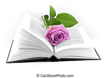 romance - a rose placed in an open book